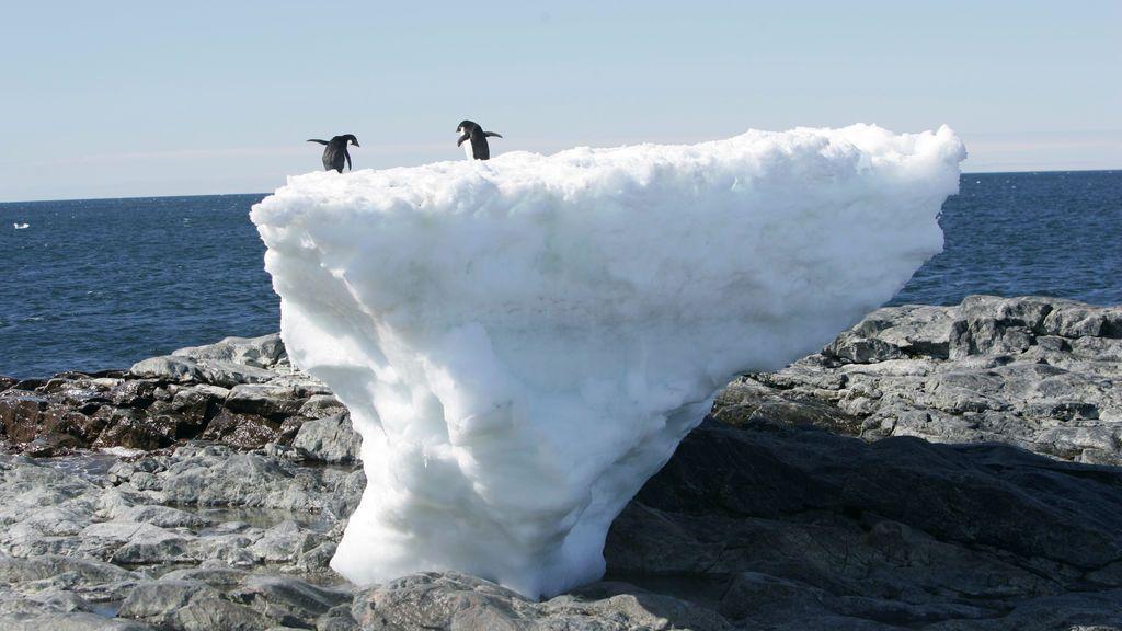 Debate en las redes en torno al récord de temperatura de 20ºC en la Antártida