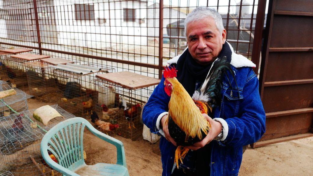 El presidente de la Asociación Mundial de Gallos de Combate con un ejemplar de Combatiente Español