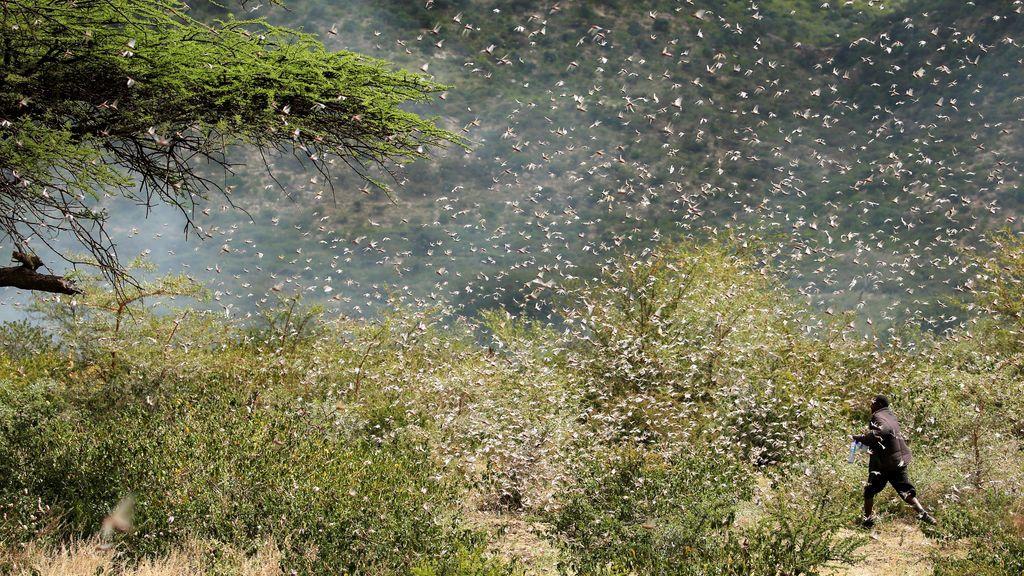 Malas noticias: la lluvia empeora la plaga de langosta en África Oriental