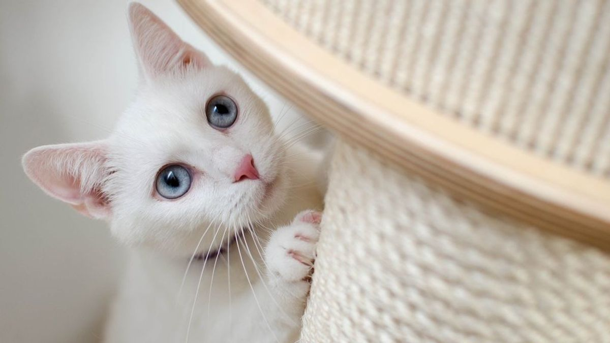 Día Internacional del Gato: curiosidades sobre este felino
