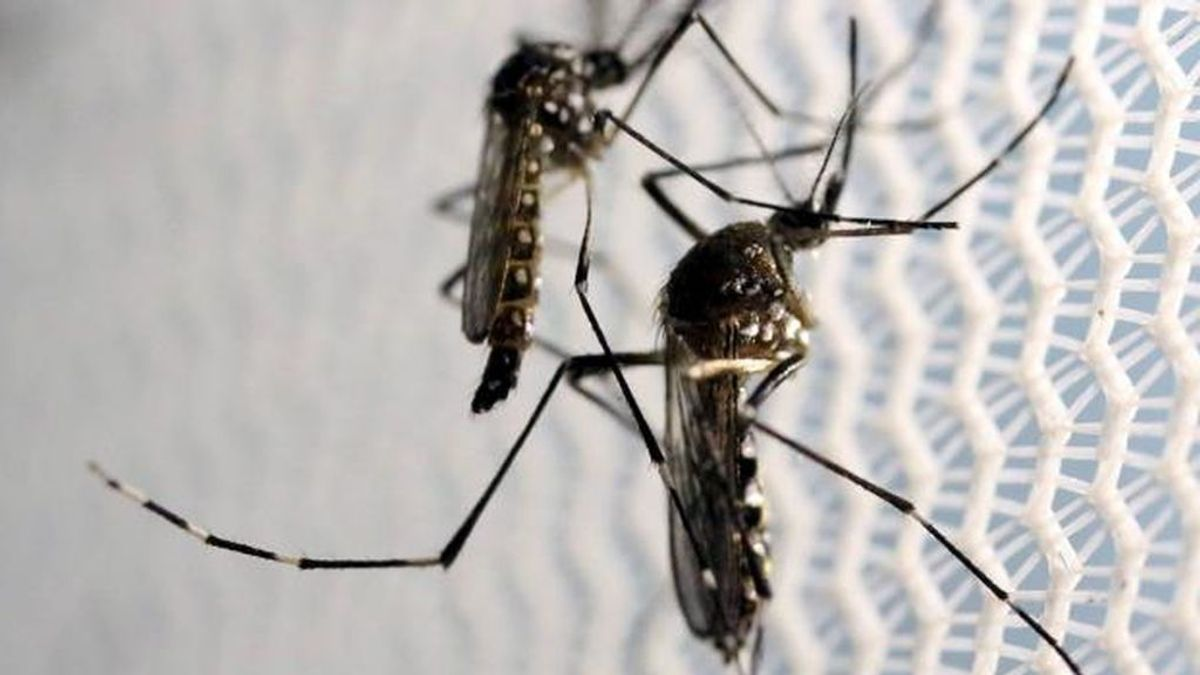 El dengue se extiende en el Caribe y los turistas lamentan que no están siendo advertidos