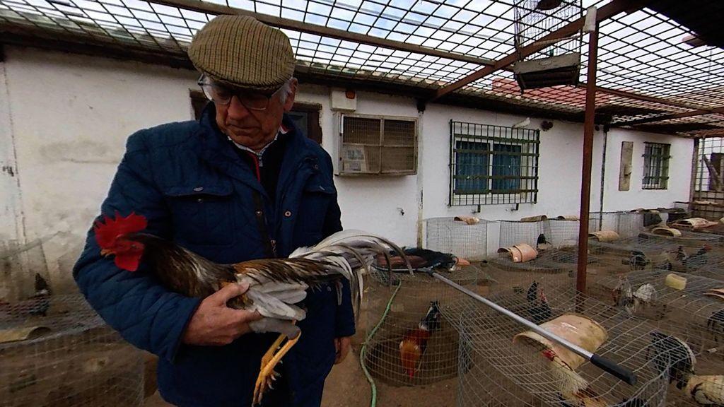 Antonio Calvo con uno de sus gallos
