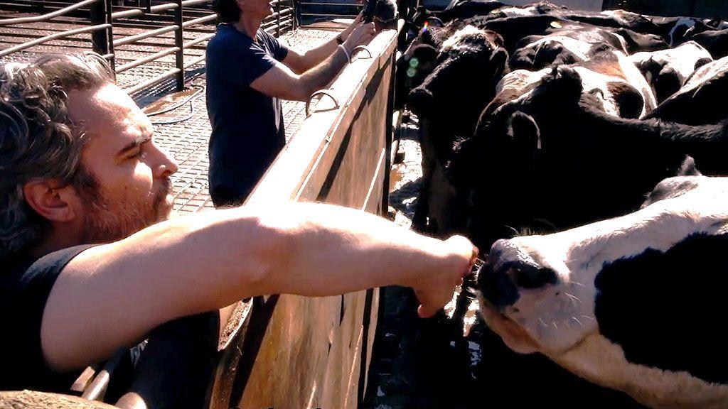 El discurso animalista de Joaquin Phoenix en los Oscar no era postureo: así salva a dos vacas de ser sacrificadas