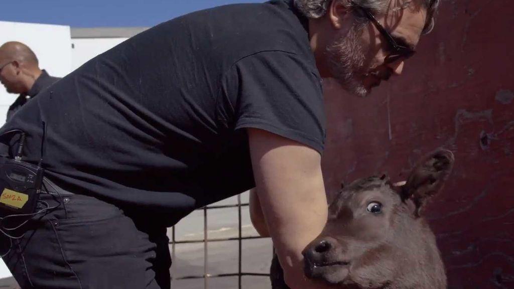 Joaquin Phoenix salvando un becerro en Los Ángeles