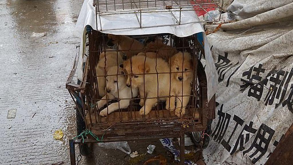 Ciudad china redacta ley para prohibir comer perros a raíz del coronavirus