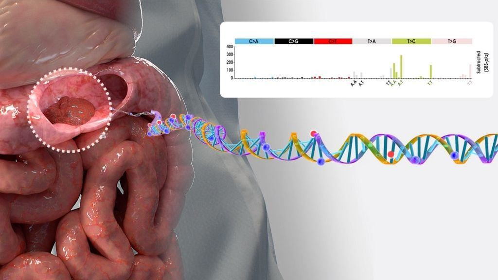 Avance contra el cáncer: descubren que una bacteria común podría causar mutaciones genéticas que desarrollan cáncer