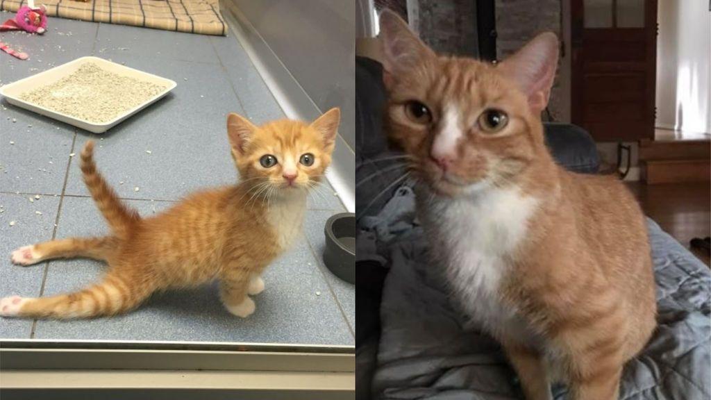 La historia de Mac'n'Cheez: el gato que nació parapléjico y que ha logrado trepar y controlar sus patas traseras