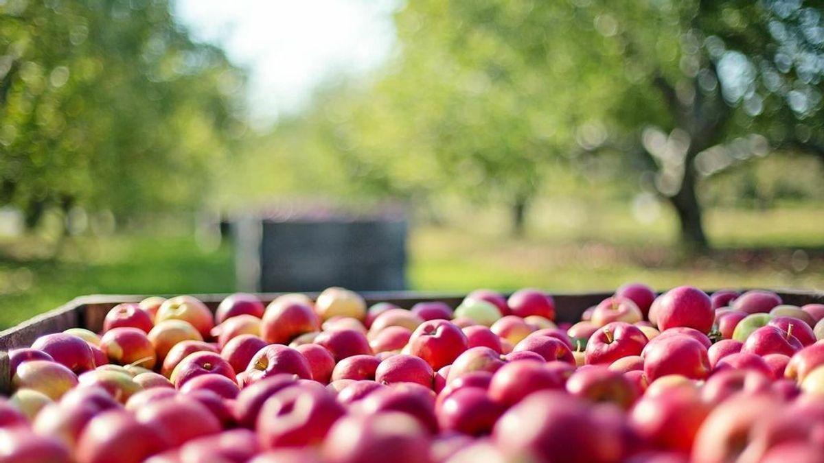 ¿Qué es la agricultura ecológica? Principales característica de este tipo de cultivos