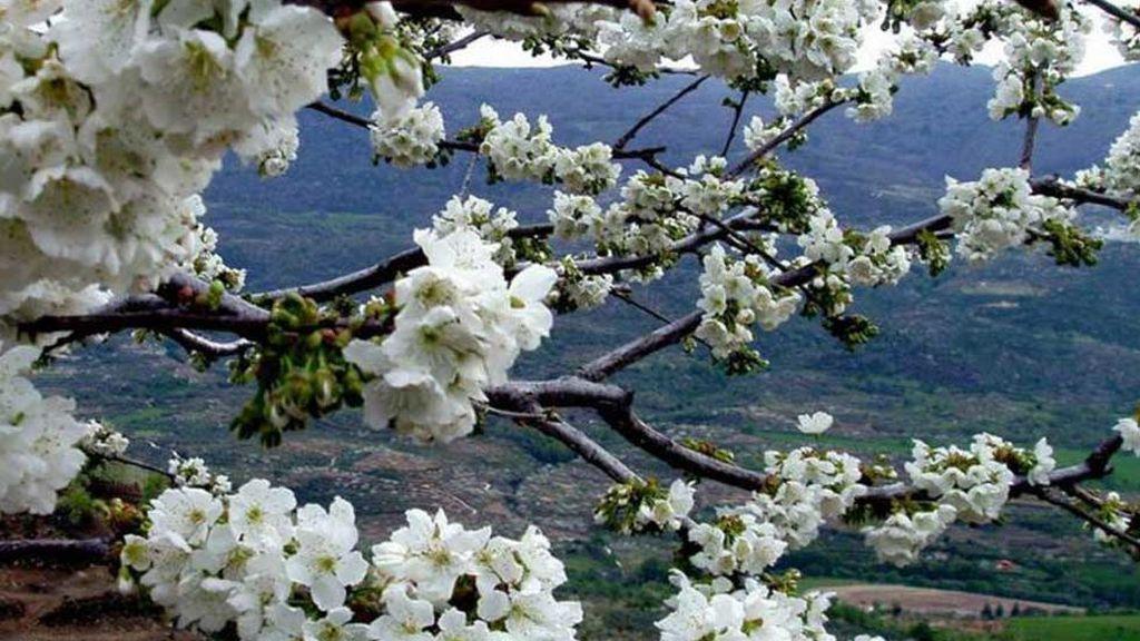 Vista del Valle desde los cerezos en flor