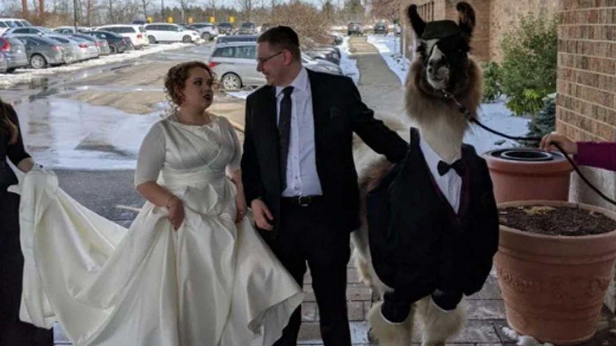 Se presenta en la boda de su hermana con una llama