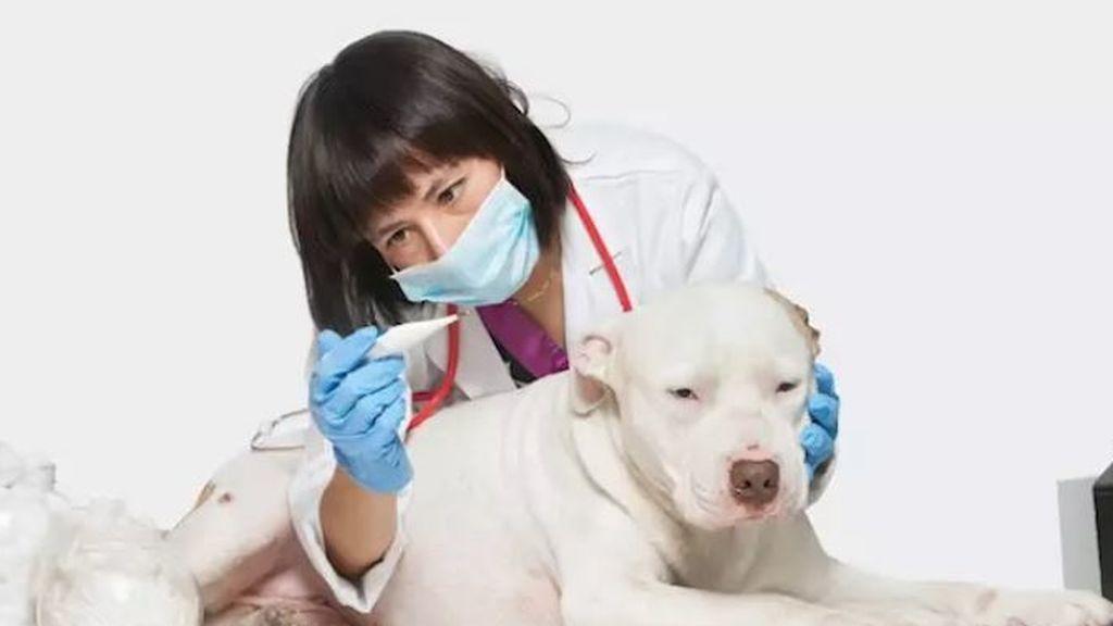 """Expertos aclaran que """"no está demostrado"""" que las mascotas puedan transmitir el coronavirus"""
