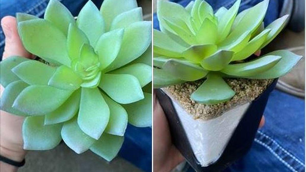 Descubre que su planta es artificial después de dos años regándola