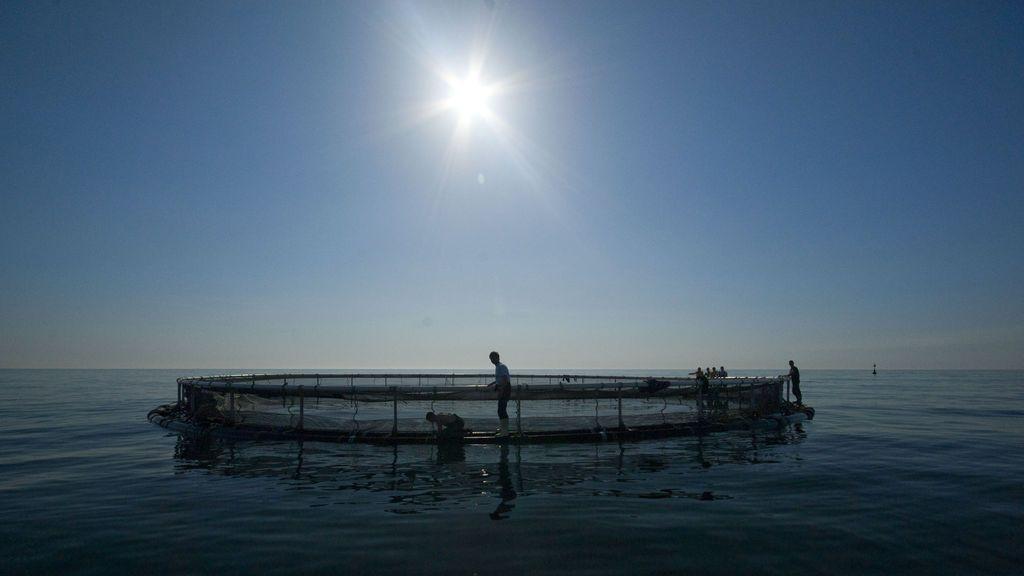 Pescados que puedes encontrar en el súper libres de anisakis