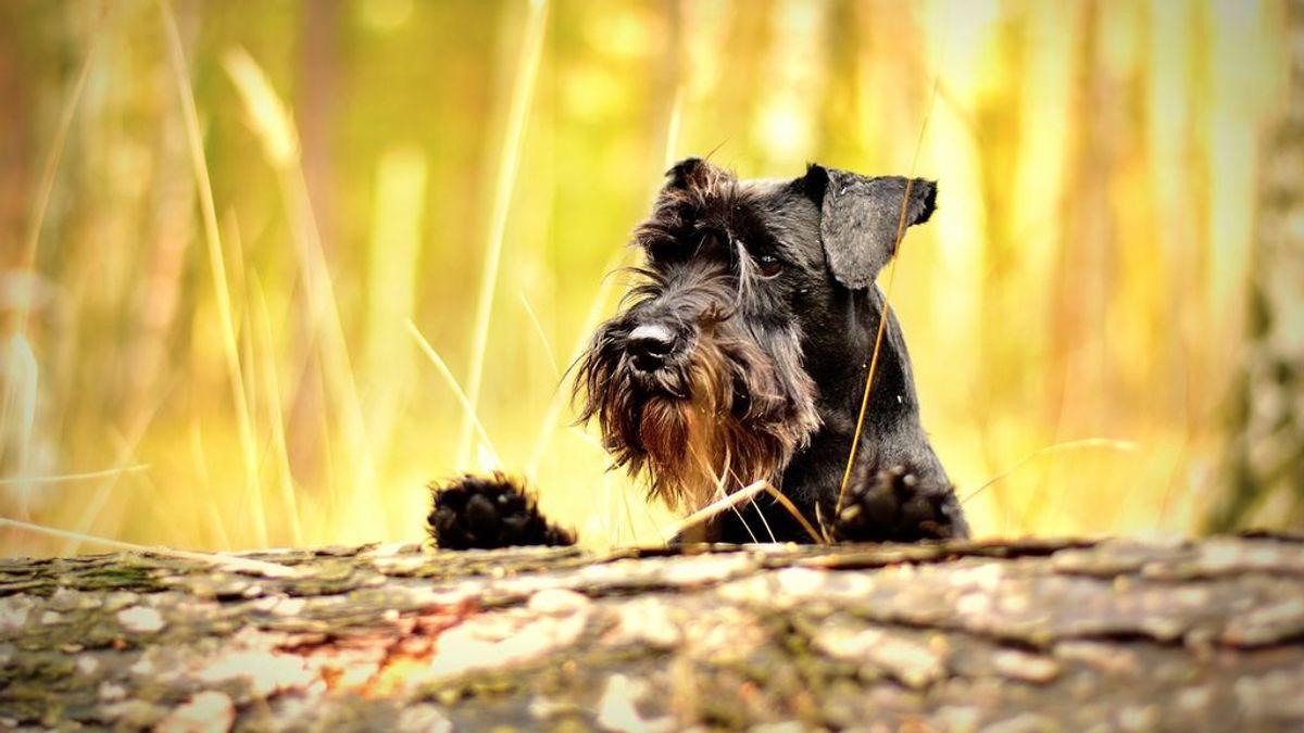 Tres de cada cuatro perros sufren algún tipo de ansiedad