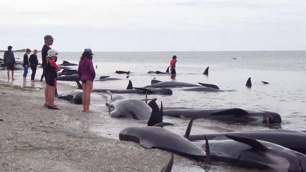 Cuarto Milenio 2019 Programa 620 El misterio de las ballenas grises