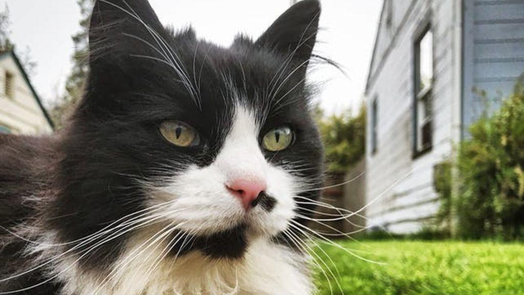 Una mujer se reencuentra con su gata tras pasar once años perdida