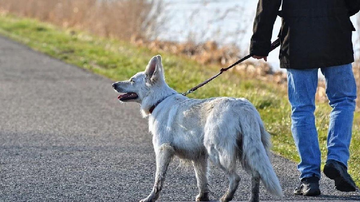 De alquilar perros a pasear a la estufa: los españoles se las ingenian para esquivar la cuarentena