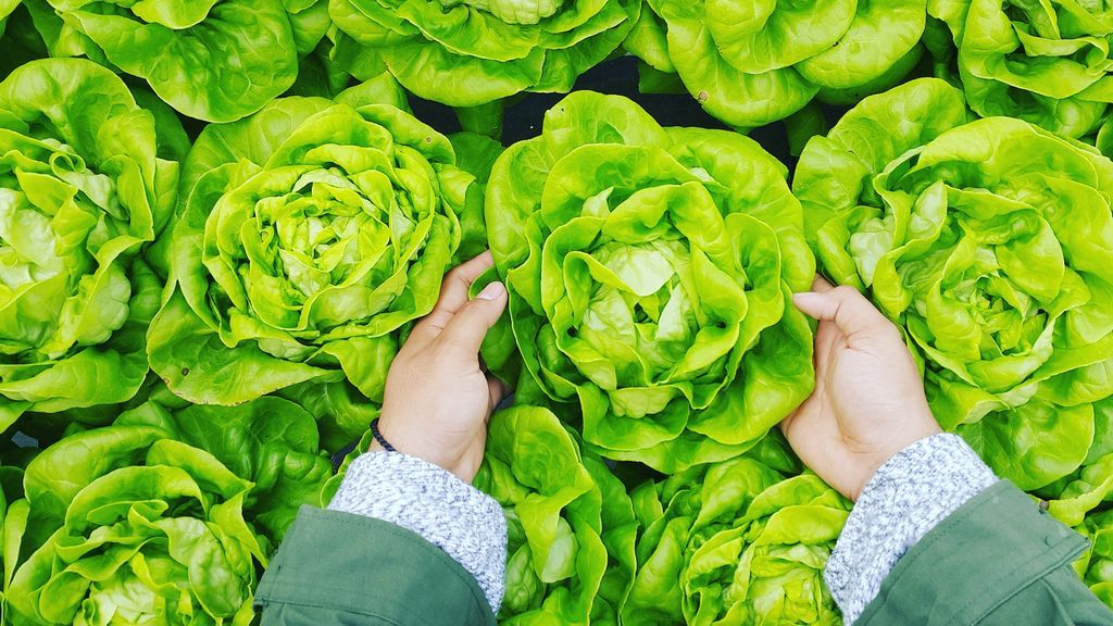 Profesiones del futuro: ¿Qué es la agricultura vertical urbana?