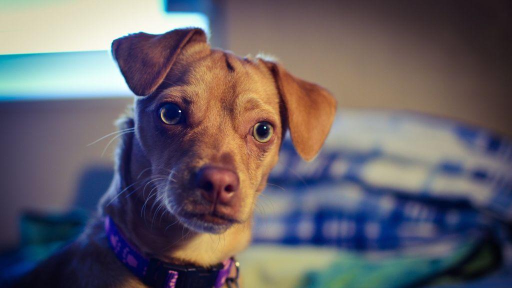 Consejos para cuidar a tu mascota durante la crisis del coronavirus
