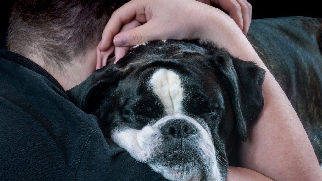 Coronavirus y mascotas: recomendaciones para el cuidado de animales en caso de dar positivo