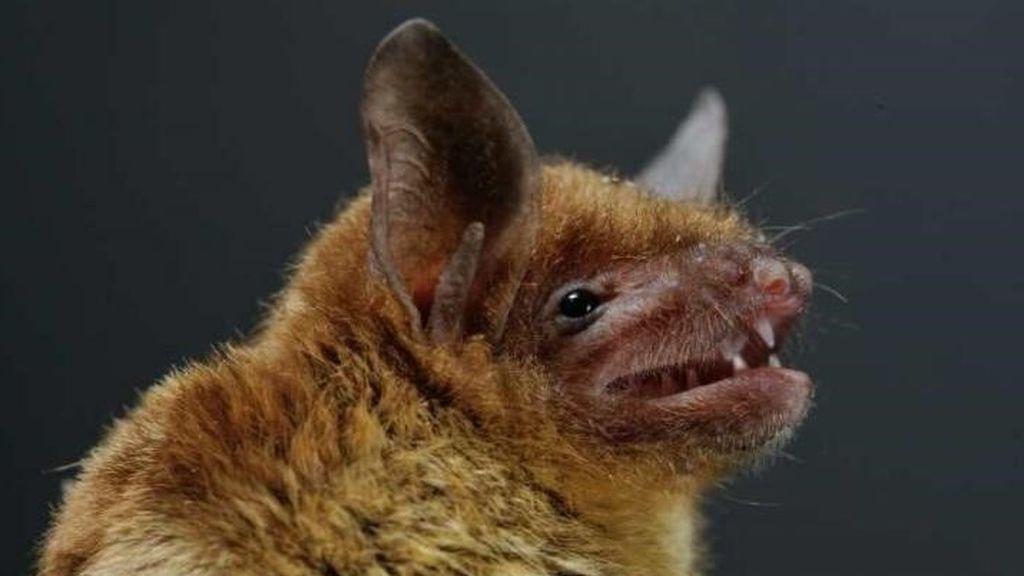 En las entrañas del coronavirus: de la bomba de relojería de los murciélagos a la mutación en el cuerpo humano