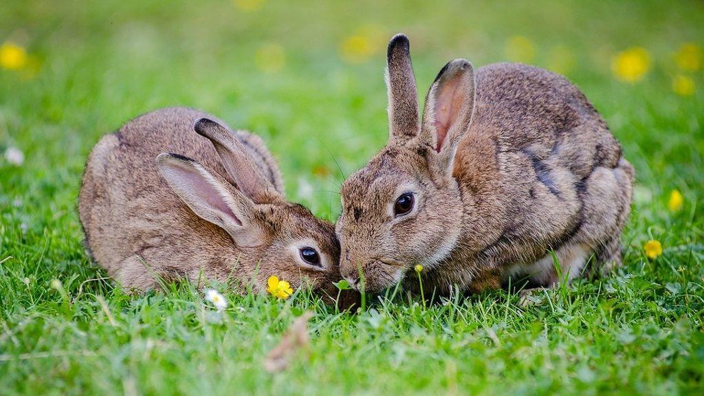 Una madre golpea a sus hijas con un palo por matar un conejo