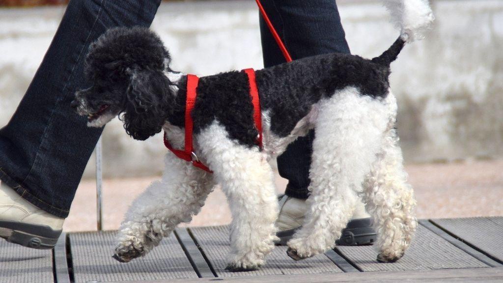 Un dueño paseando a su perro por la calle