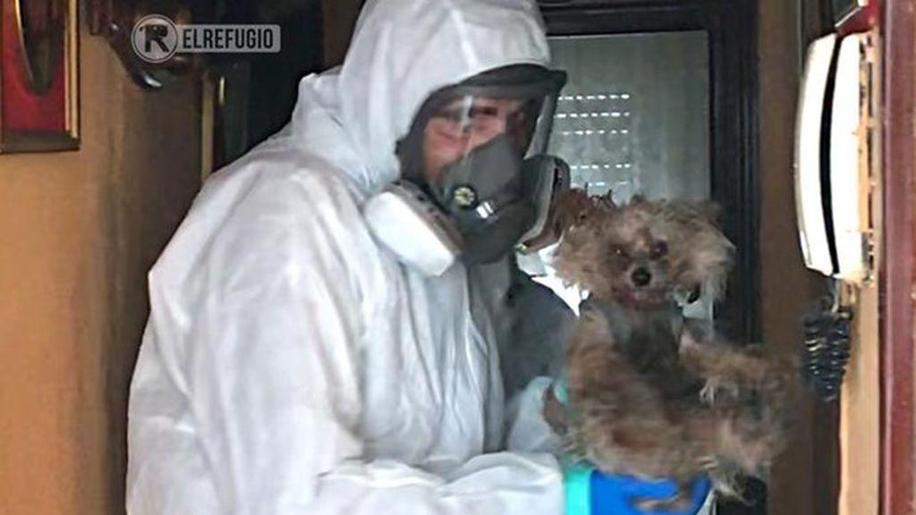 Protectora rescata a dos perros cuyos dueños están contagiados por coronavirus