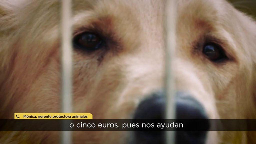 https://album.mediaset.es/eimg/2020/03/22/rgOj3beyaXQI6drMV6Dfz3.jpg