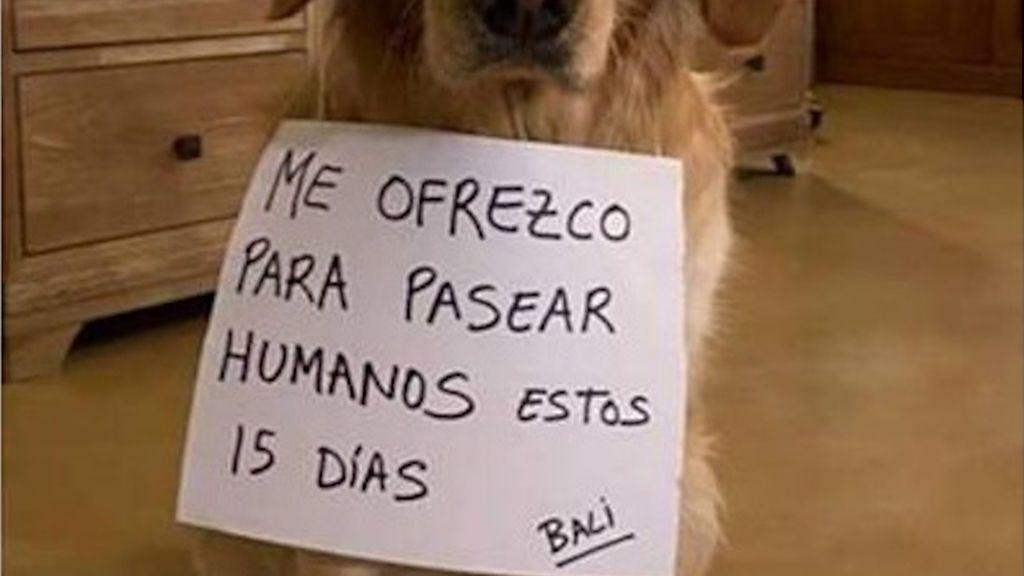 Denuncian en A Coruña a un hombre que alquilaba a sus perros para pasearlos durante el confinamiento