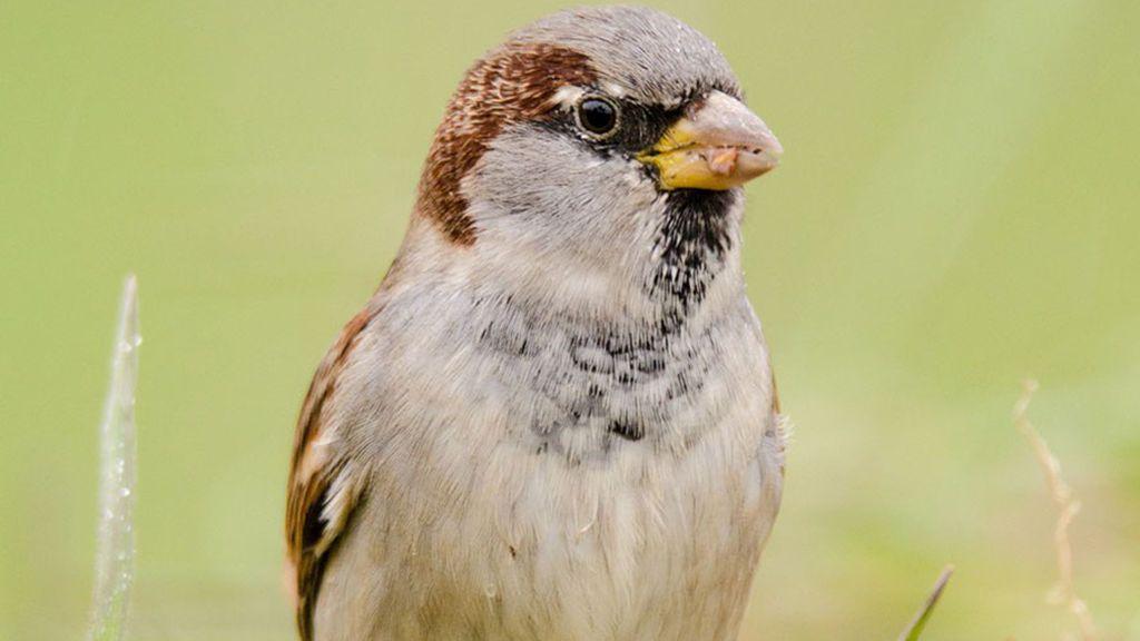 Sobrevivir al confinamiento, y disfrutarlo: por fin se escuchan pájaros en la ciudad