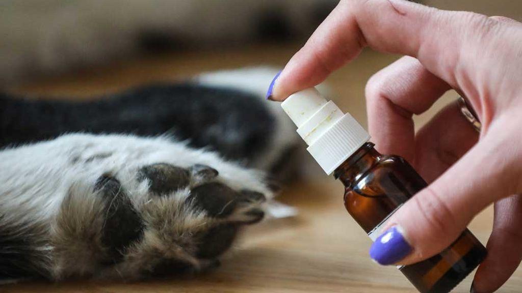 Higiene patas mascotas