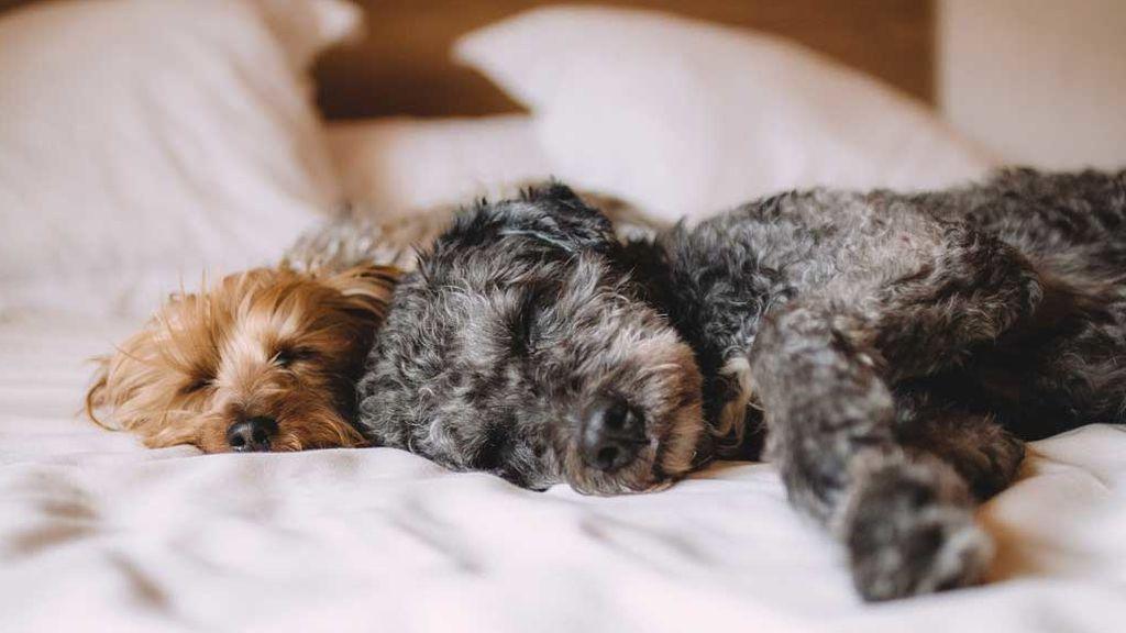 Mascotas, en casa