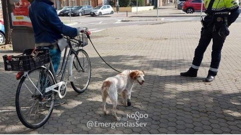 Denunciada por circular en bicicleta a un kilómetro de su casa con su perro atado al manillar en Sevilla