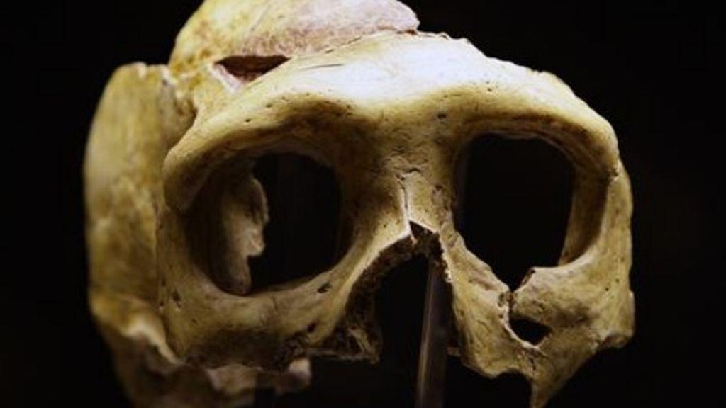 Los neandertales ya se alimentaban del mar: mejillones, peces, focas y delfines estaban en su dieta