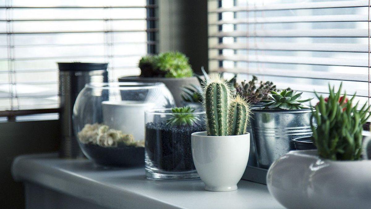 Estas plantas de interior te ayudarán a aumentar la productividad