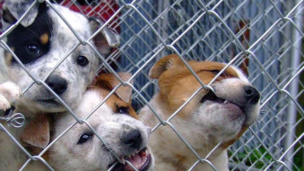 Perros, en el refugio