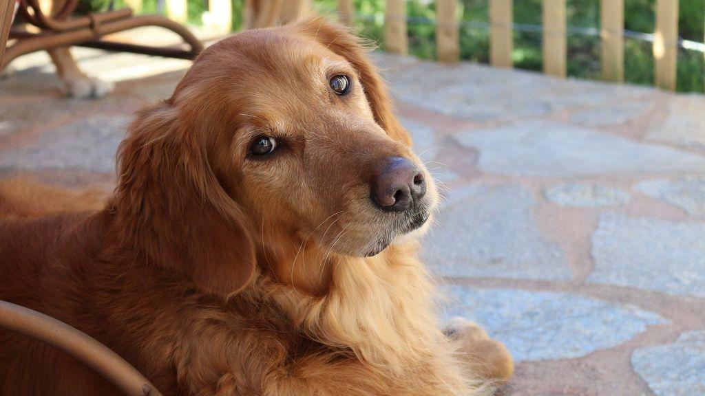 El mejor perro: Sunny le hace la compra a su dueña, en cuarentena por el coronavirus