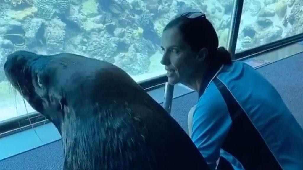 Un león marino aprovecha la cuarentena para pasear por un acuario vacío