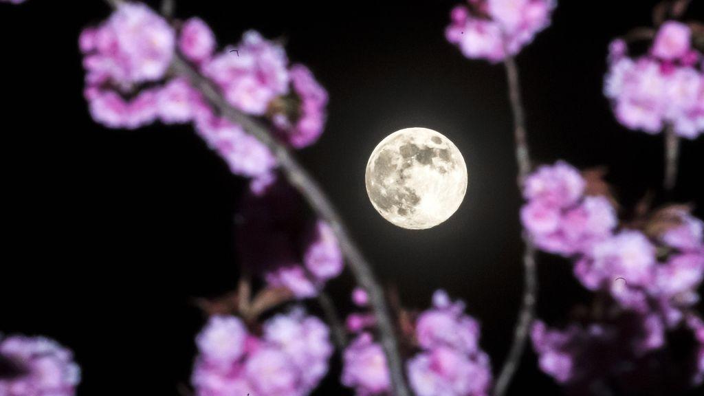 Superluna 'rosada' desde la ventana: el mejor momento para disfrutarla en cuarentena