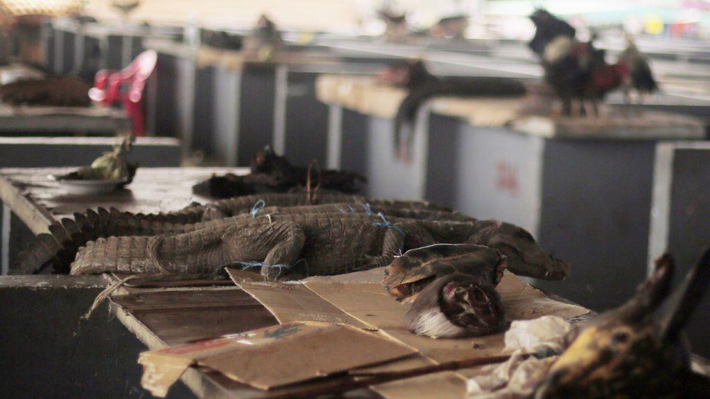 El tráfico ilegal de animales salvajes, una bomba sanitaria que ha estallado con el coronavirus