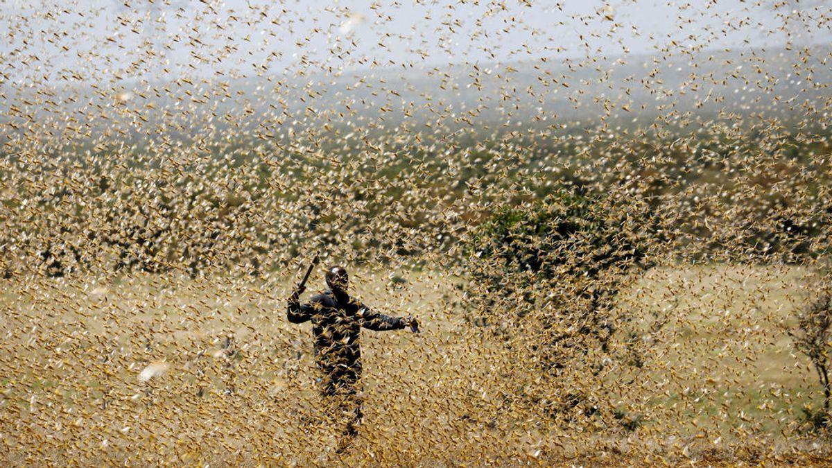 La plaga de langosta sigue su camino sin freno: la Nasa y la ONU se unen para pararla