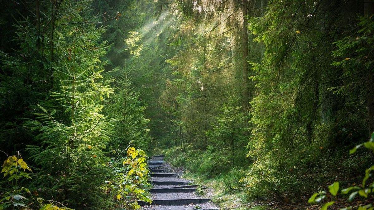 Naturaleza a casa en tiempos de cuarentena, vol. II: un paseo por el bosque desde el salón