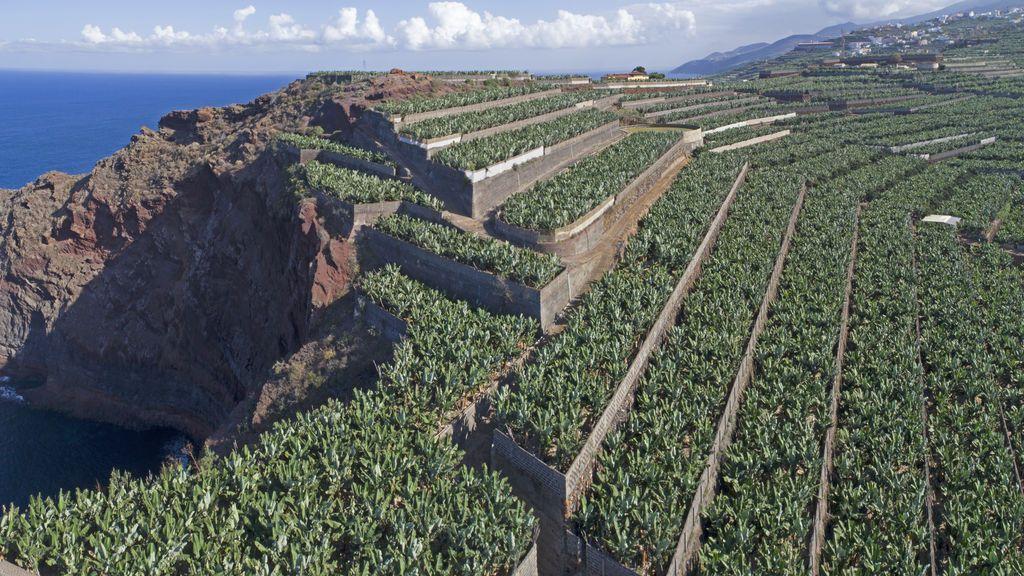 La agricultura no se detiene: el sector primario pide que se apueste por el comercio local