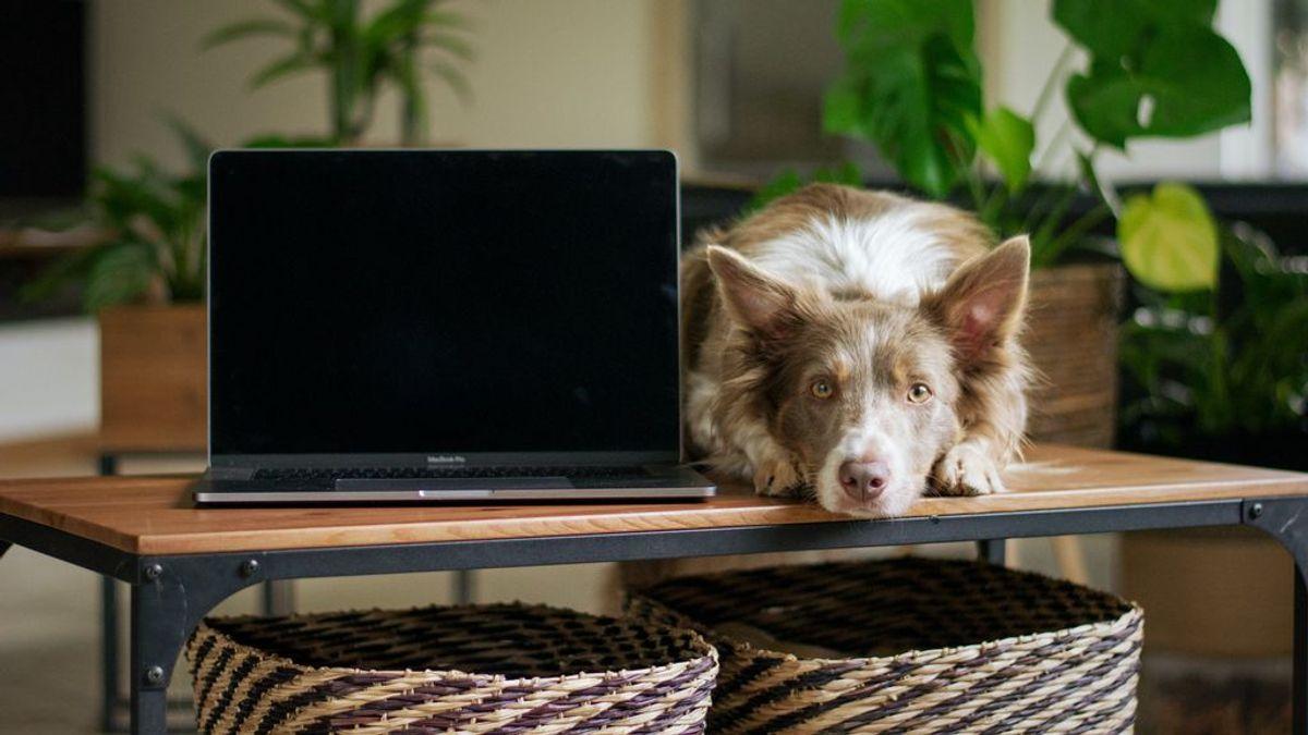 La clave para teletrabajar junto a tu perrete es la organización