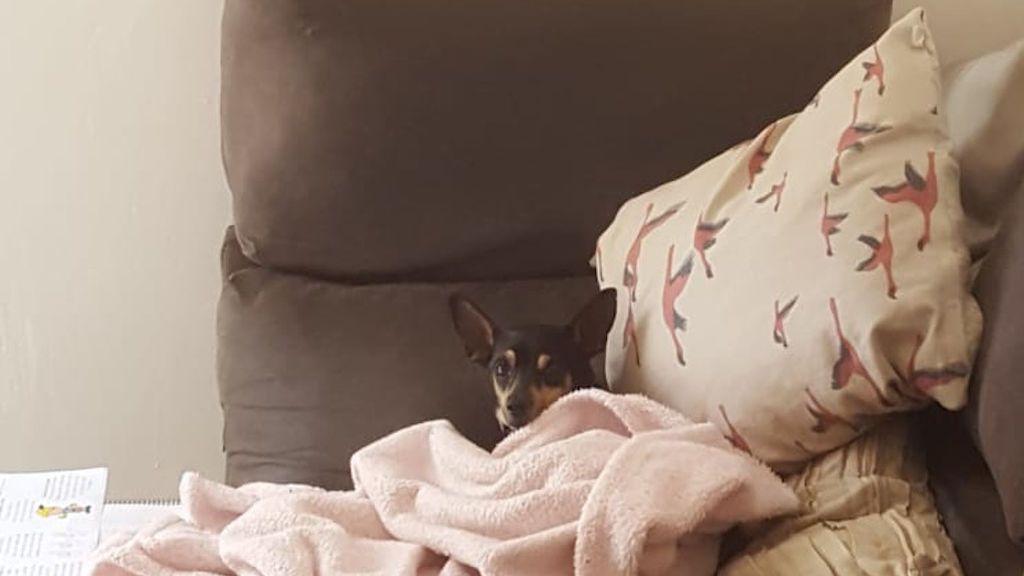 perro abandonado en casa de acogida