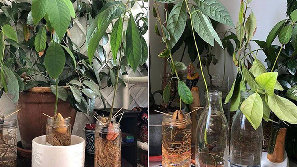 Jugando con la naturaleza en casa