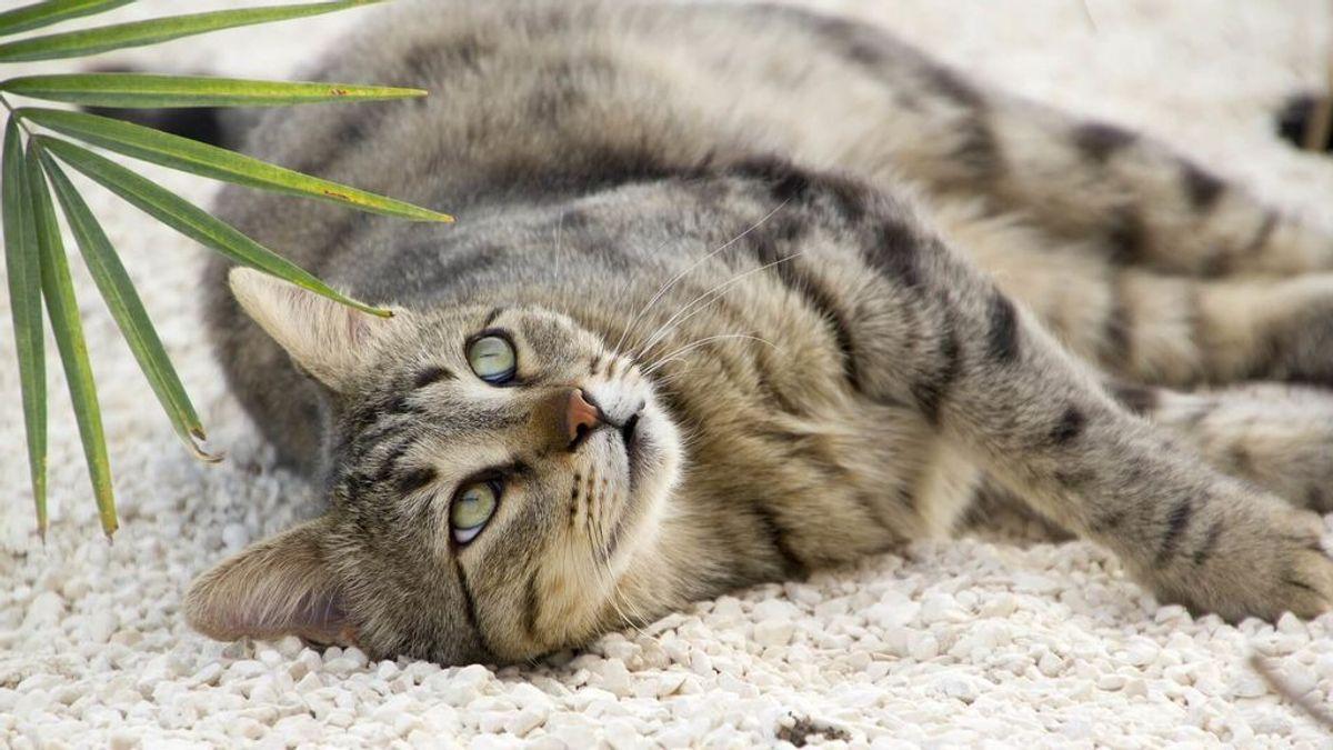 Conviviendo en casa con mascotas: cómo mantenerla limpia