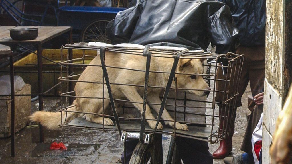 Sacan a los perros de una lista oficial de animales comestibles en China