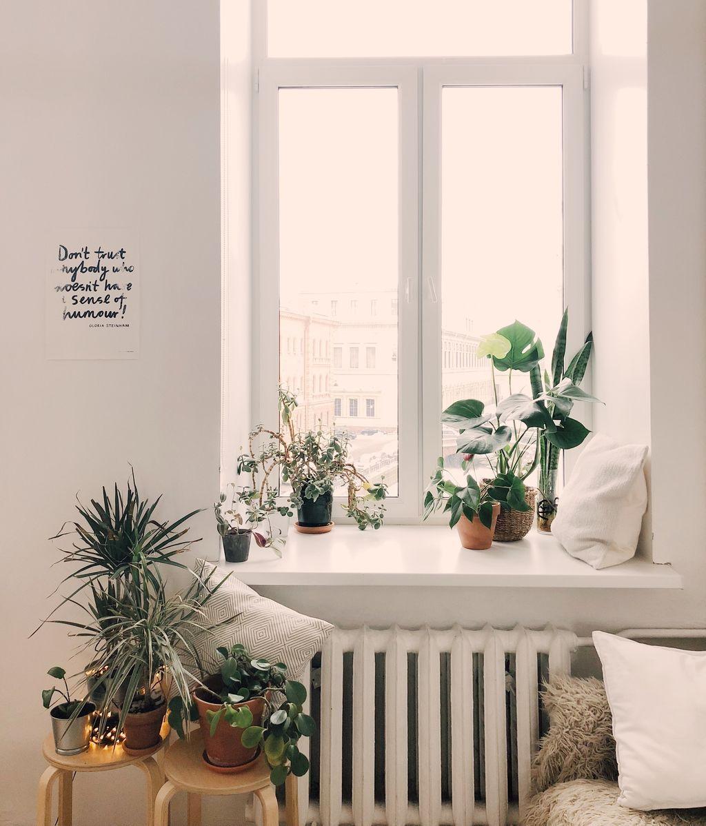 plantas-2-nord-pexels